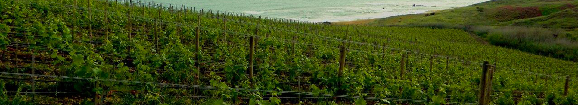 GURRA DI MARETHE ENCHANTMENT OF A VINEYARD BY THE SEA