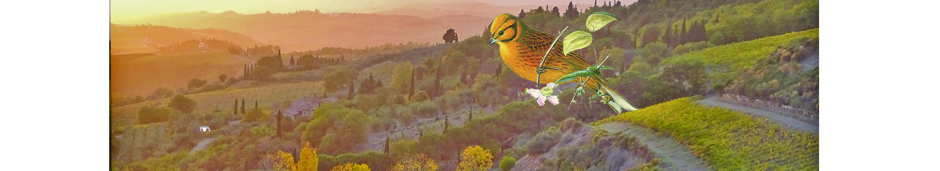 THE BIRDS OF CASTELLAREHERE IS THE PROTAGONIST OF THE 2017 VINTAGE